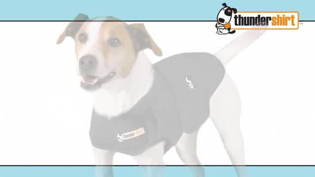 Thundershirt Grey Dog Anxiety Treatment Shirt Bed Bath Beyond